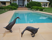 Free Standing Sculpture: Ducks as seen in Gardens Illustrated Magazine, UK