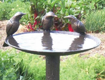 NZ Garden Sculpture: Tui Birdbath - launched at the Ellerslie International Flower Show, New Zealand