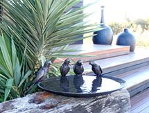 Garden Gift Ideas for men and ladies: Lorikeet Birdbath Bowl - launched at the Melbourne International Flower & Garden Show, Australia
