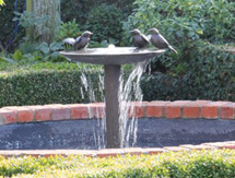Garden Fountains: Blackbird Birdbath Fountain pictured in the Marlborough, New Zealand