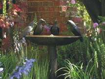 Garden Fountains: Aussie Magpie Birdbath Fountain as seen at the Melbourne International Flower & Garden Show, Australia
