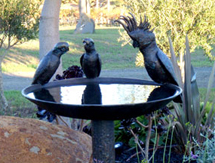 Garden Gift Ideas for men and ladies: Cockatoo & Galah Birdbath as seen in Country Style Magazine, Australia