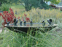 800mm-Blue-Wren-&-Willy-Wagtail-Birdbath_215